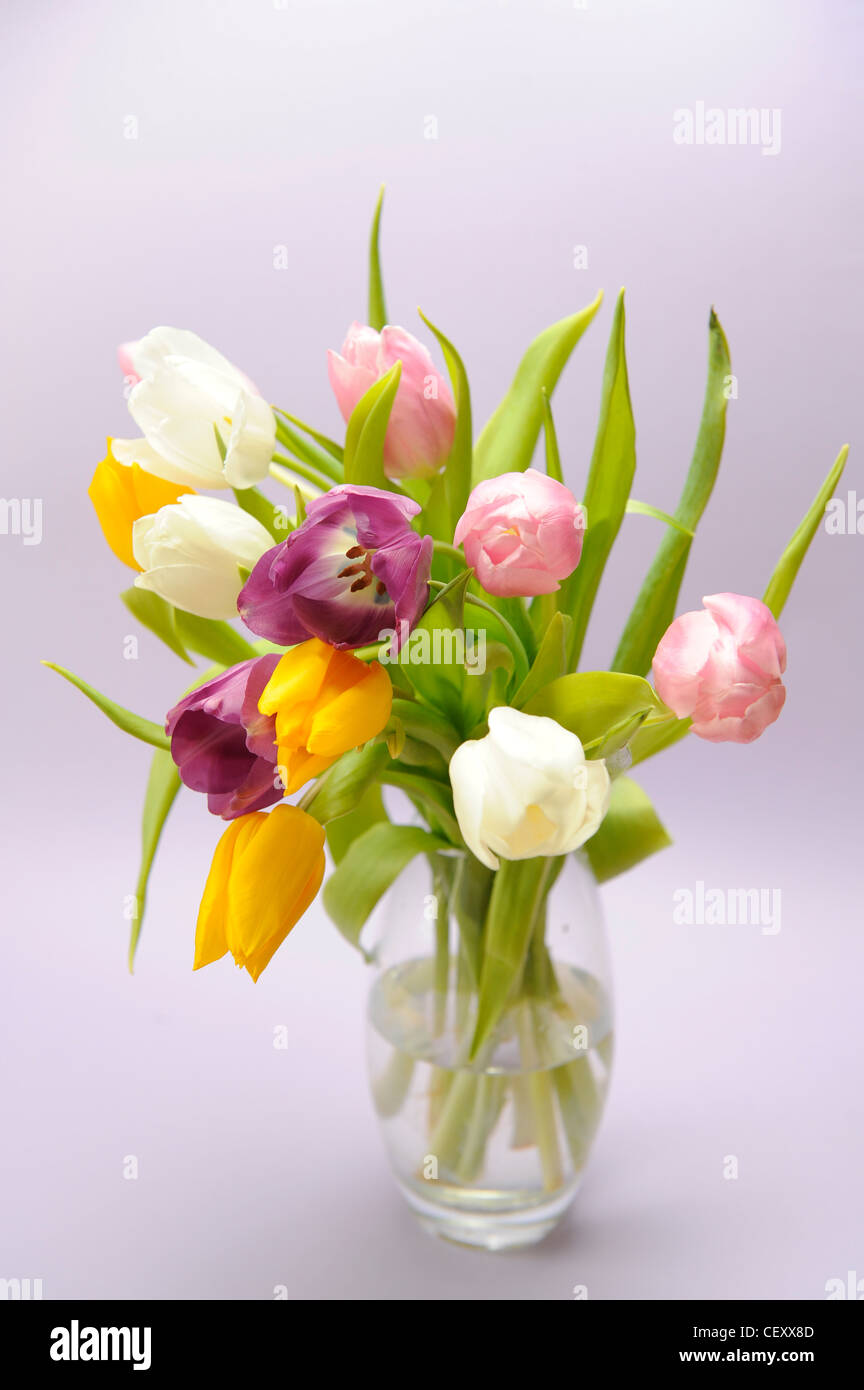 Vase of tulips gallery vases design picture tulips in glass vase stock photos tulips in glass vase stock a still life image of reviewsmspy