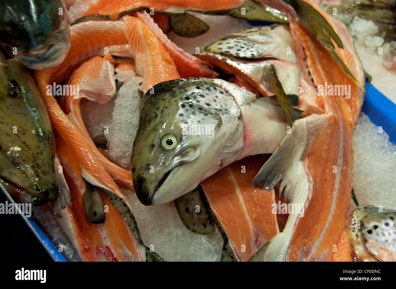 Salmon for sale in the sydney fish market australia stock for Stock fish for sale
