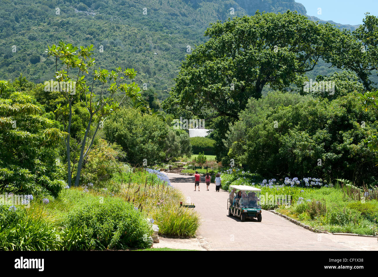 Kirstenbosch Botanical Gardens Cape Town South Africa Garden Southern  African Shuttle Car Guided Tour