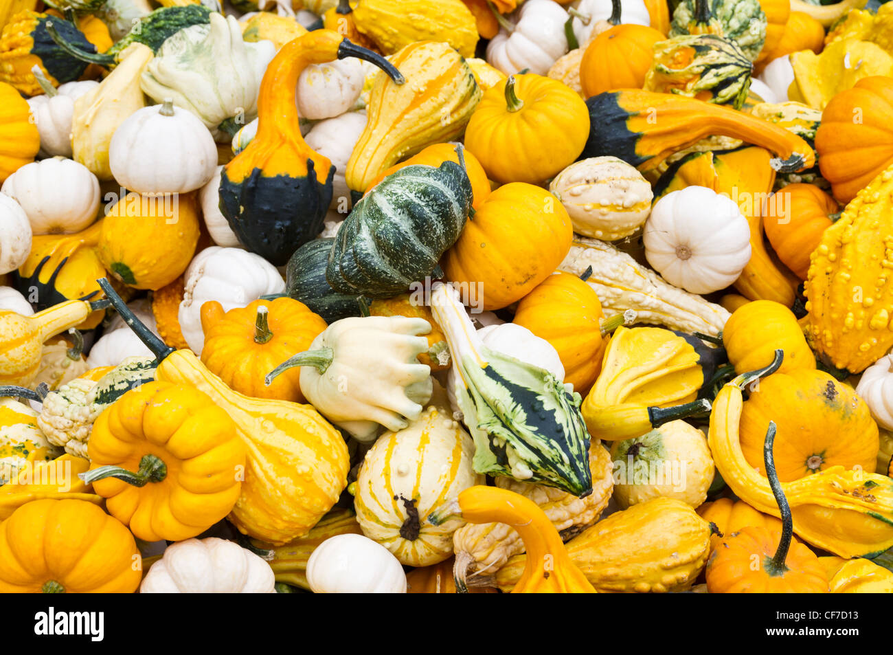 just picked colored gourds of assorted types ready for sale as fall decorations - Fall Decorations For Sale
