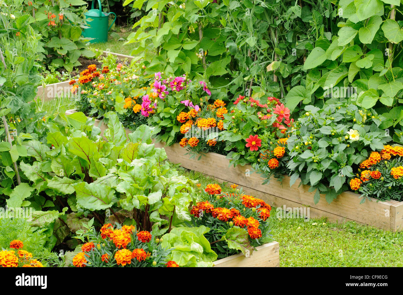 Summer garden with mixed vegetable and flower raised beds uk june stock photo royalty free - Mixed style gardens ...