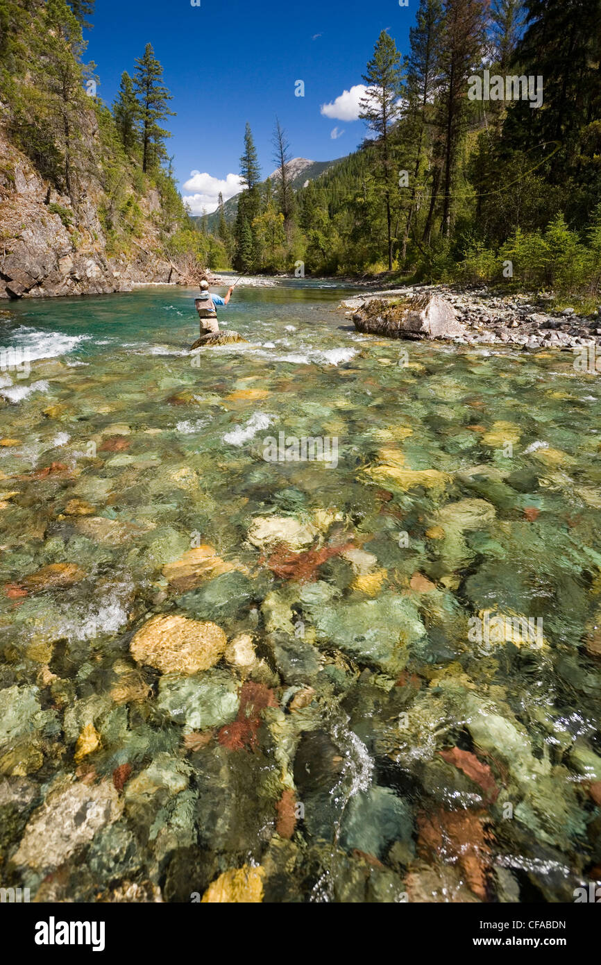 Fly fishing on tributary of elk river near fernie elk for Fly fishing british columbia