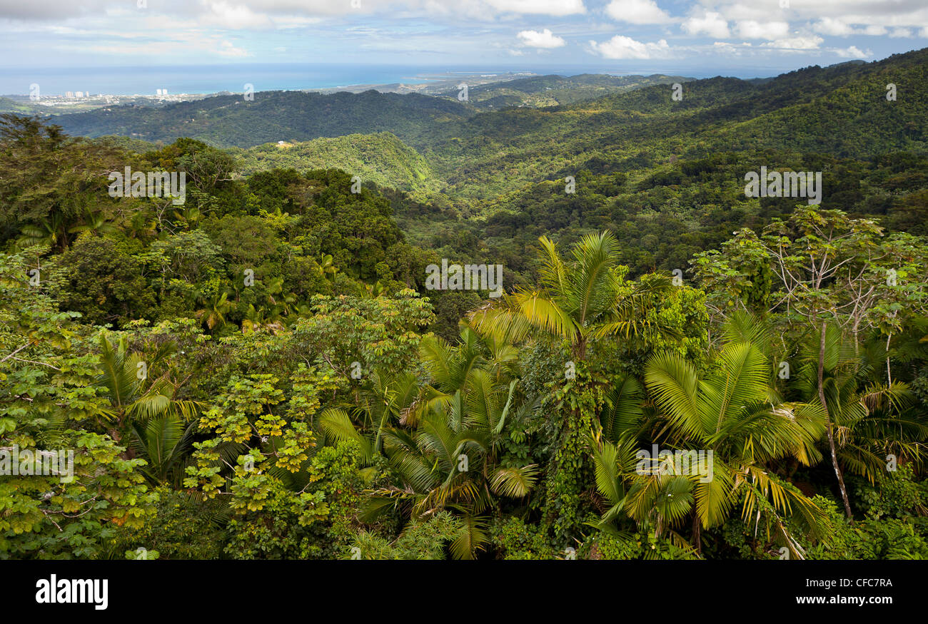 EL YUNQUE NATIONAL FOREST PUERTO RICO - Rain forest jungle canopy landscape and coast near Luquillo & EL YUNQUE NATIONAL FOREST PUERTO RICO - Rain forest jungle canopy ...