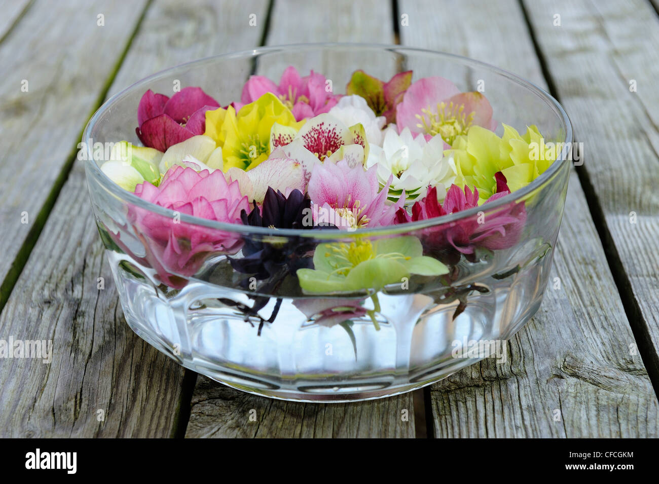 Floral decoration of hellebore flowers floating on water for Floating flowers in water