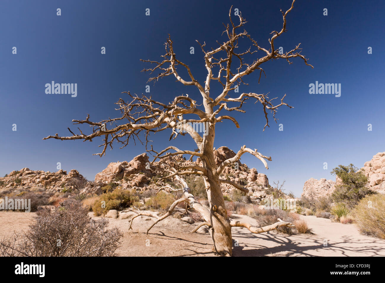 joshua tree national park jewish singles The best road trips to take in portugal  7 former national parks to visit  a five-day road trip to palm springs and joshua tree road trips.