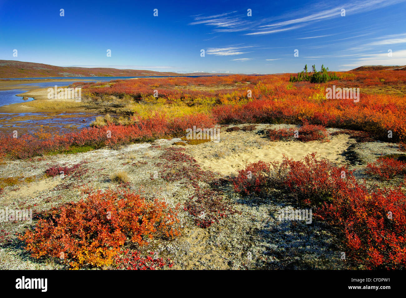 Autumn tundra, Barrenlands, central Northwest Territories, Arctic ...