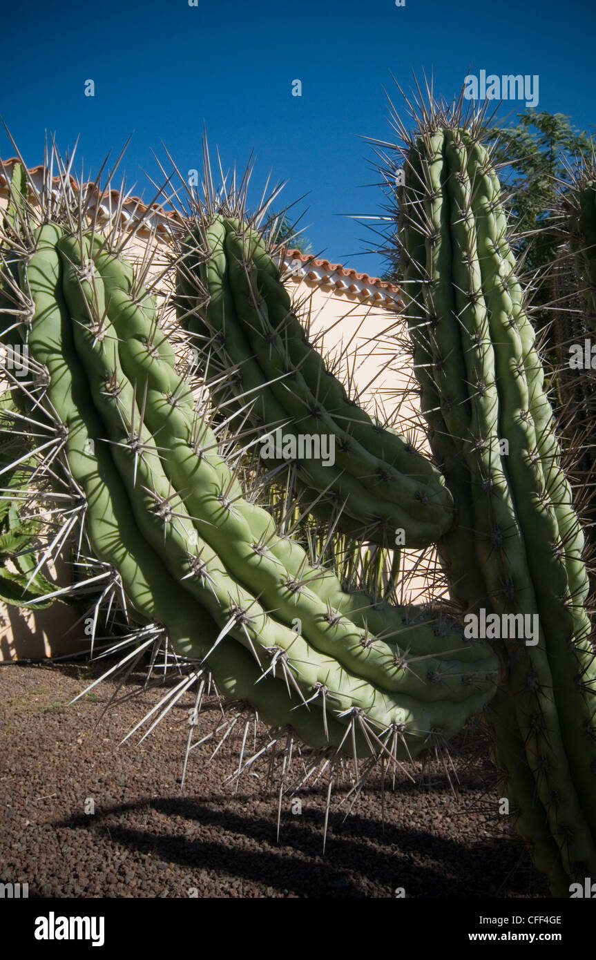 cactus cacti spike spikes spines protective Cactaceae fort ...