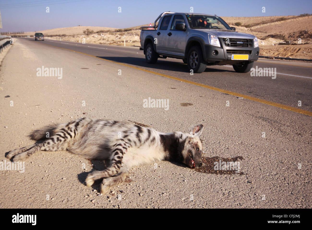 http://c8.alamy.com/comp/CFJ2MJ/striped-hyena-hyaena-hyaena-road-kill-photographed-in-israel-aravah-CFJ2MJ.jpg