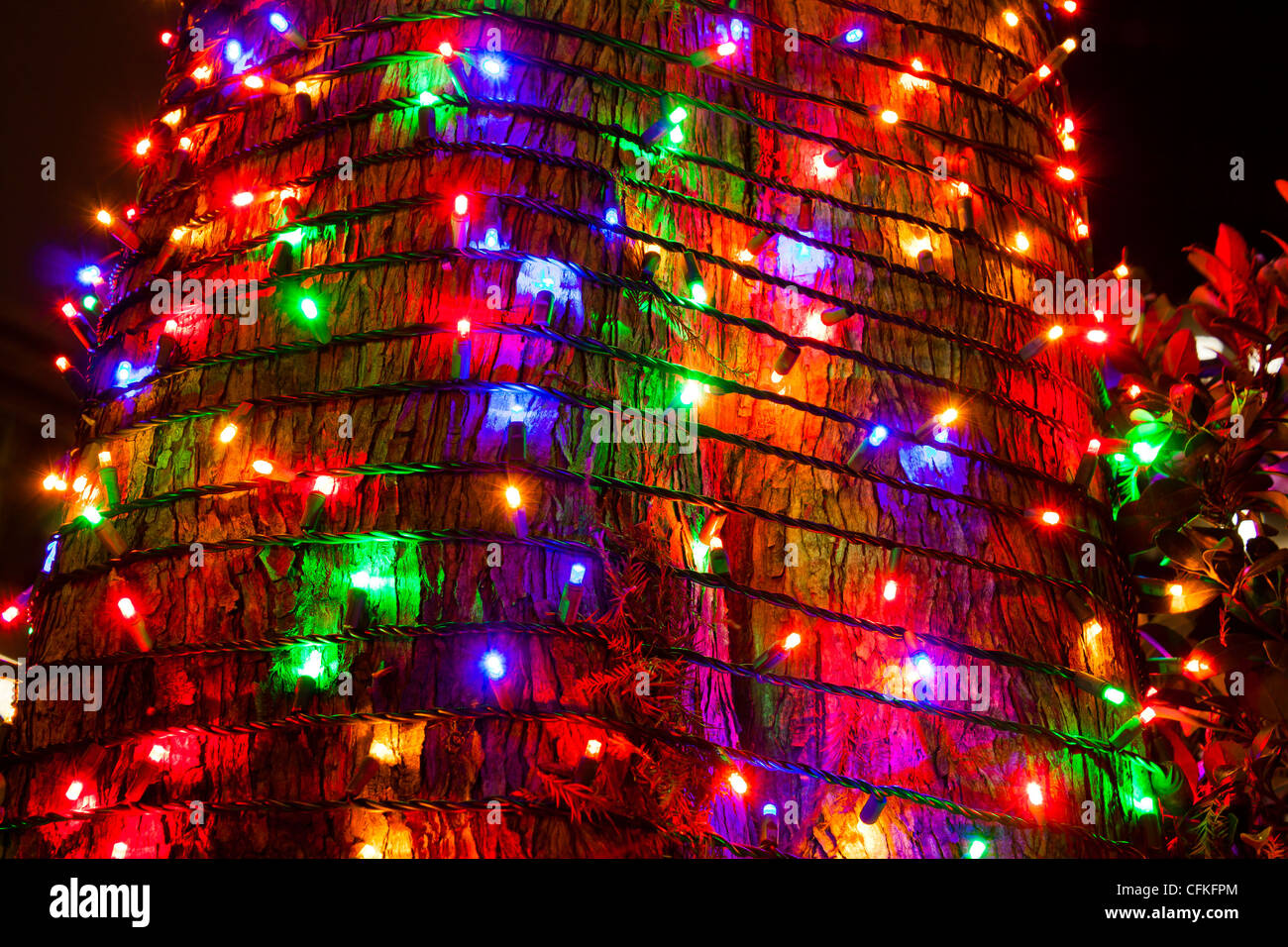 multicolor christmas lights wrapped around tree - Multicolor Christmas Lights