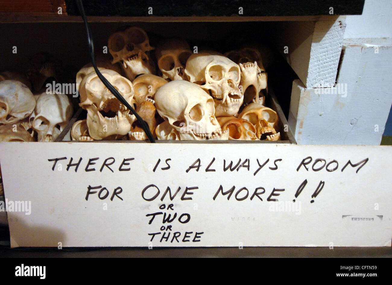 Small Monkey Skulls Stack Up In The Subbasement Of Ray Bandars - Sub basement