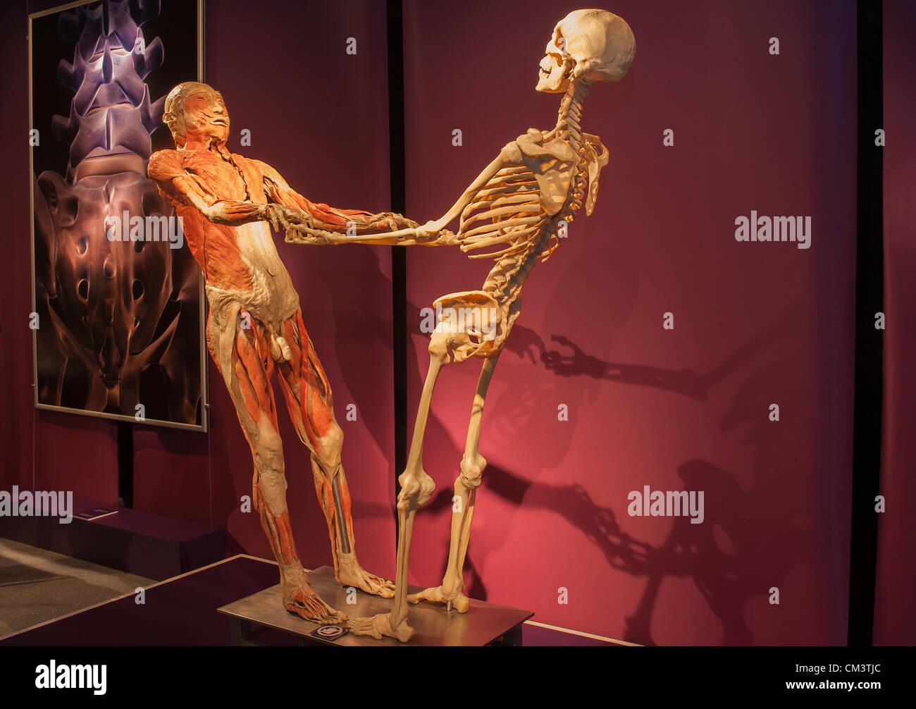 Human anatomy museum nyc