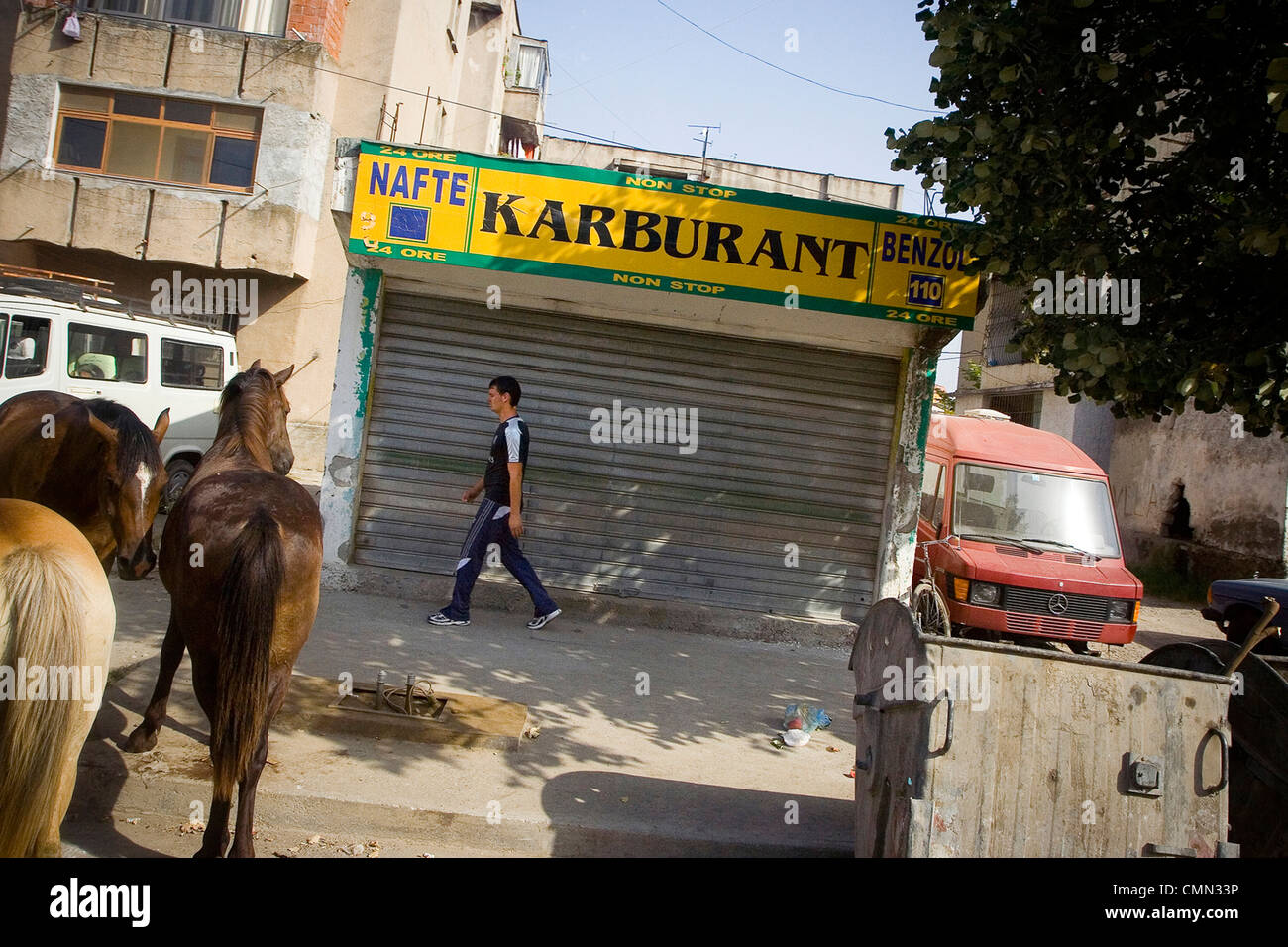 Horses On Street Of Northern Albanian City Of Shkoder Horses - Poorest country in europe