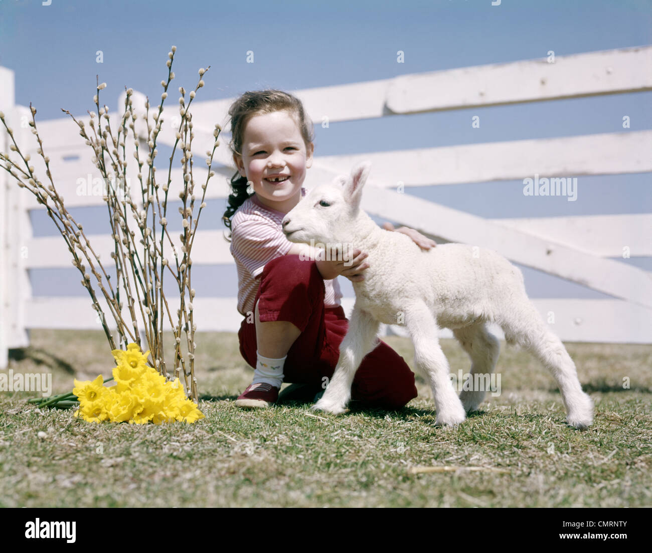 Retro daughter pussy 1950s 1960s SMILING GIRL HOLDING SPRING LAMB FENCE DAFFODILS PUSSY WILLOW  RETRO