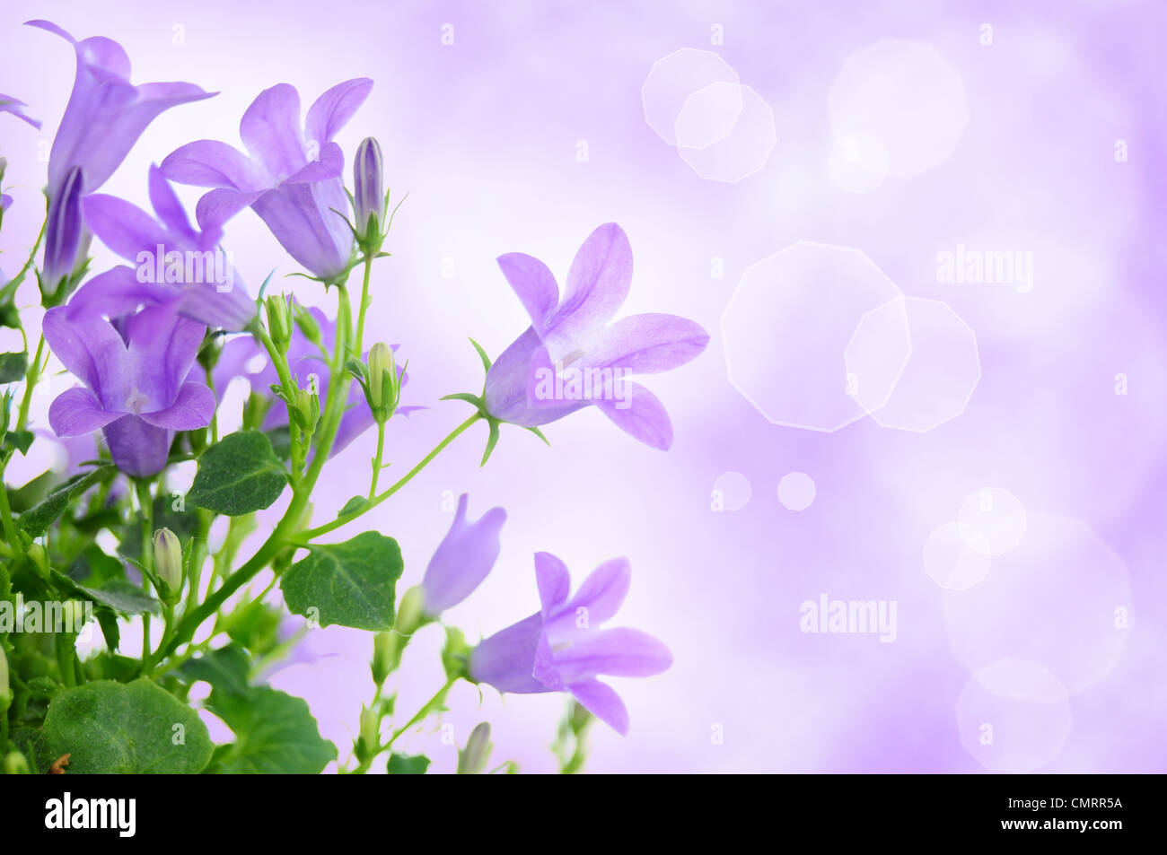 Beautiful Purple Backgrounds Pictures To Pin On Pinterest