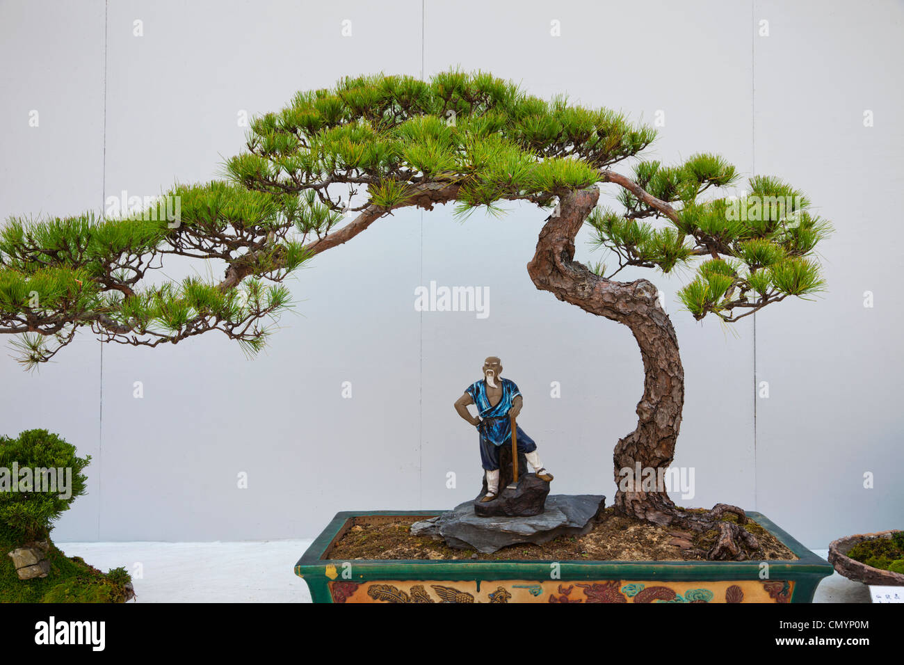 Bonsai Tree Hong Kong Stock Photos Amp Bonsai Tree Hong Kong Stock