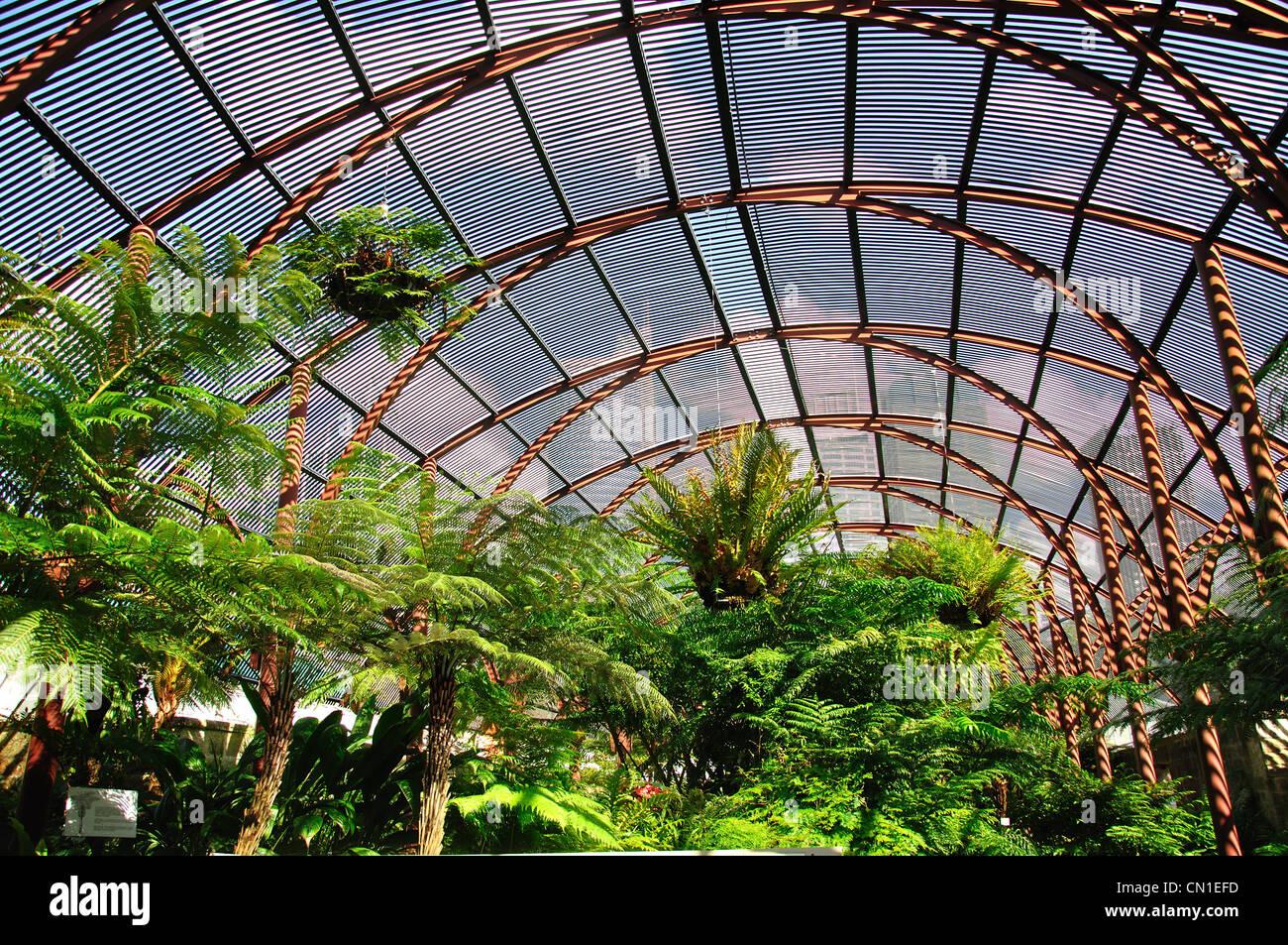Ferns Inside Victorian Palm House The Sydney Fernery Royal Stock Photo Royalty Free Image