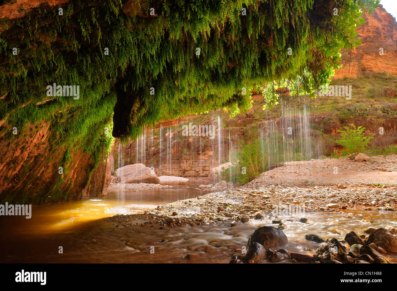 The waters of showerbath spring falling into kanab creek for The canyons at falling water