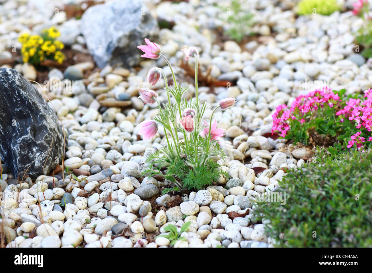 Small Rock Garden Constructed With Rocks And Alpine Plants