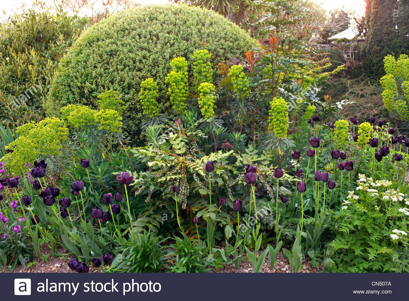 spring border at denmans garden home of garden designer john brookes chichester sussex england - Garden Design John Brookes