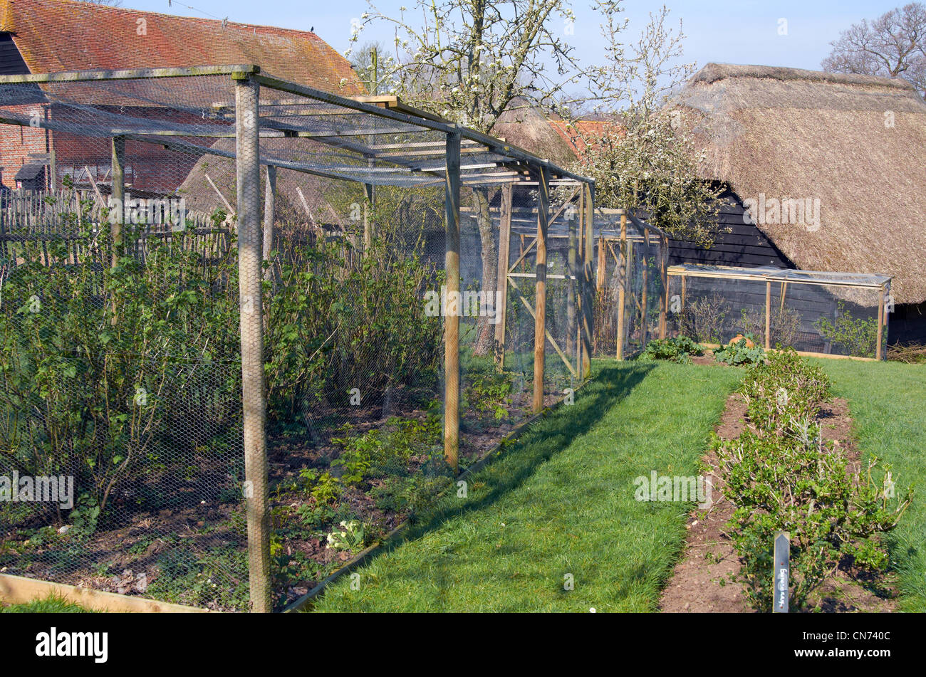 Pole And Wire Netting Fruit Cage Protecting Fruit Bushes From