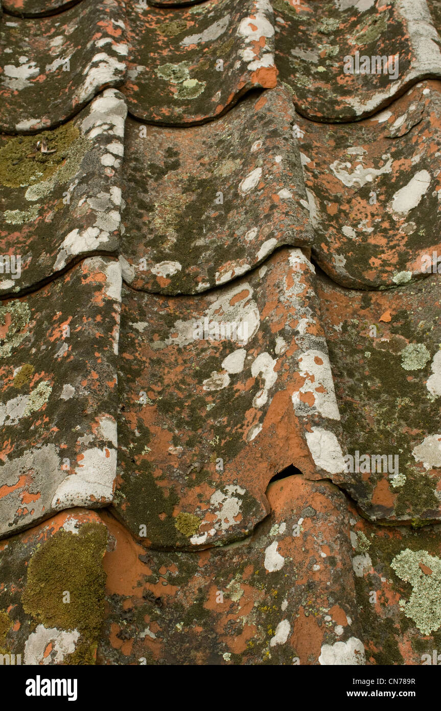 Lichen Covered Tile Roof In Sweden Stock Photo Royalty