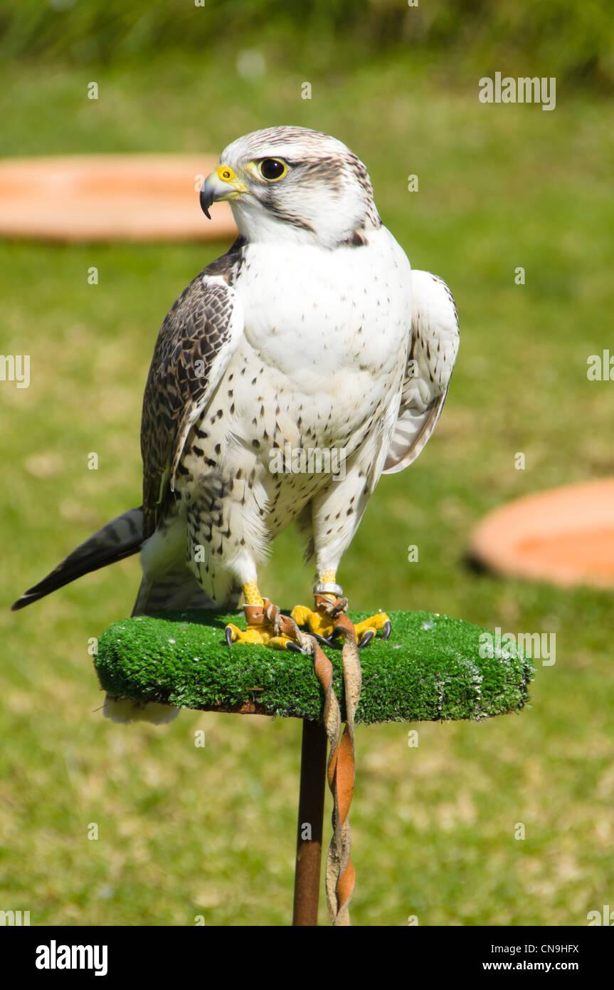 Birds of prey aviary / Voliera pro drave ptaky (ZOO Prague - Czech ...