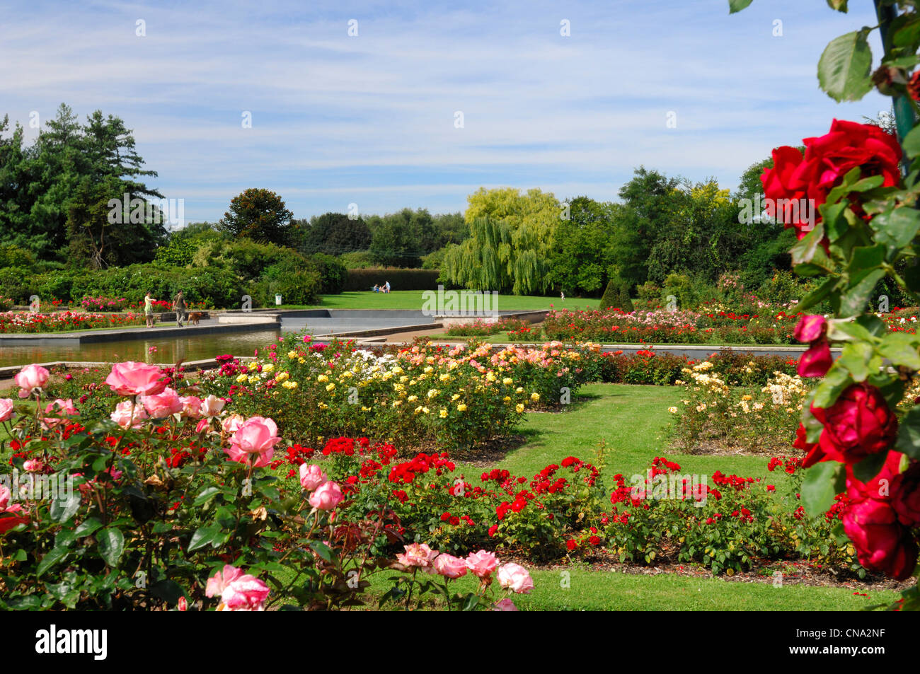 france nord lille jardin des plantes de lille roses and walkers stock photo royalty free. Black Bedroom Furniture Sets. Home Design Ideas