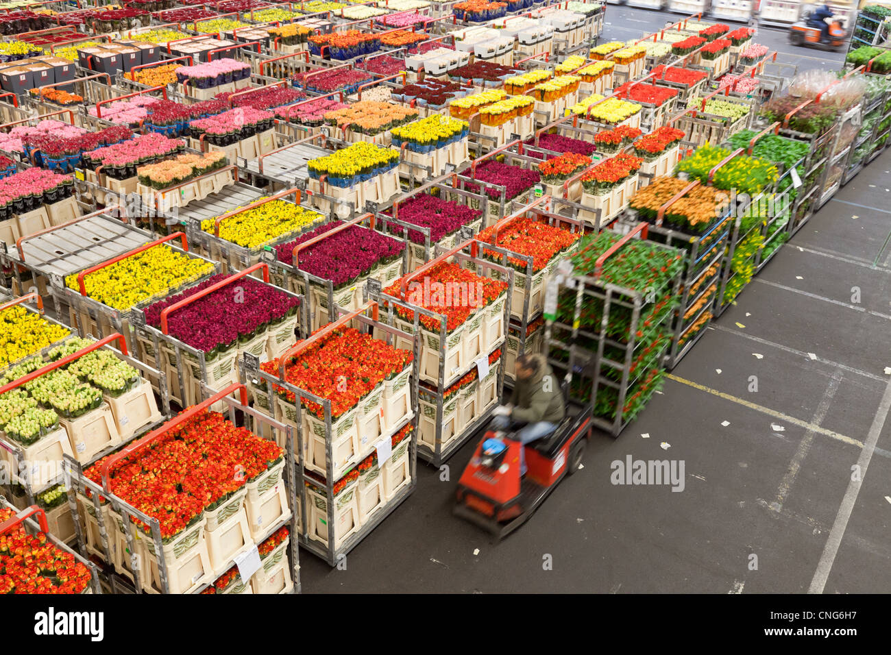 Valentine's rush at Dutch flower auction