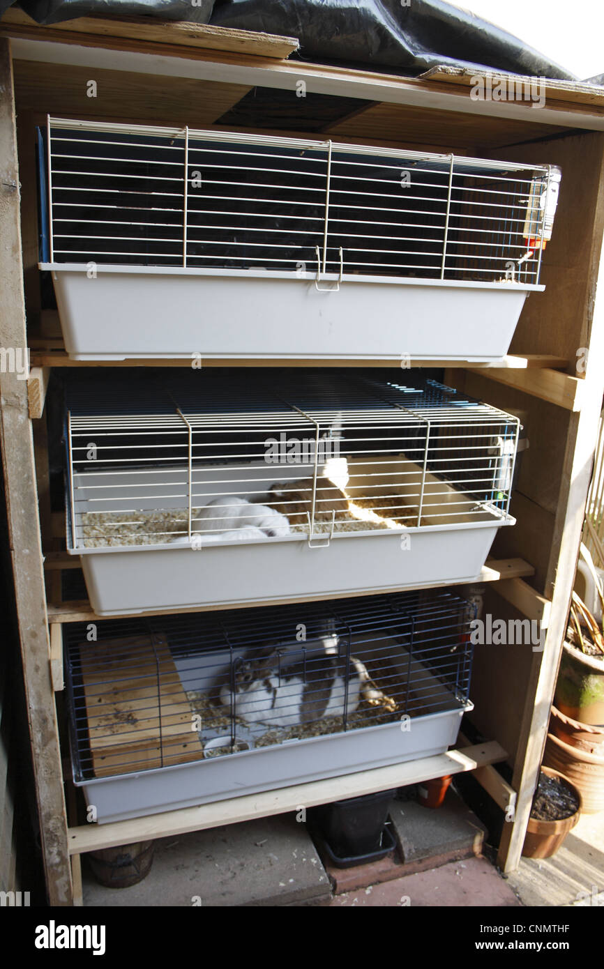 Domestic rabbit and guinea pigs adults in outdoor cages for Outdoor guinea pig cage