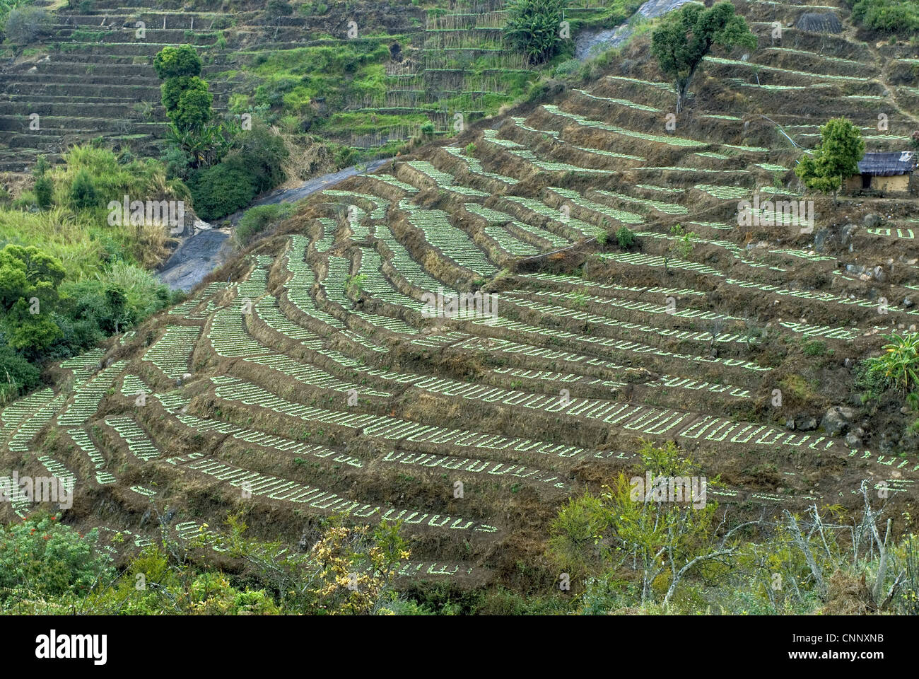 Terrace cultivation mountain slope terraced farming stock for What is terracing
