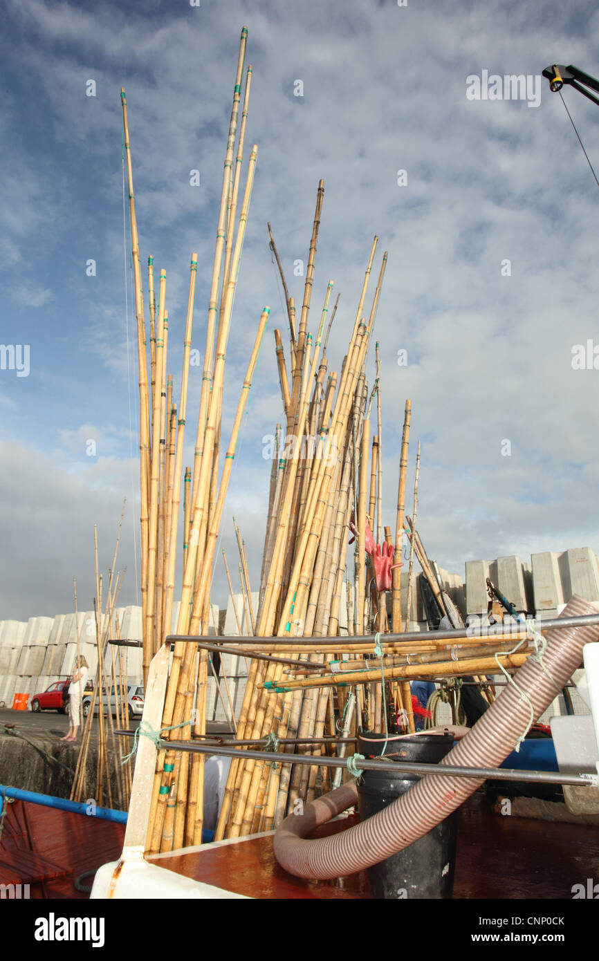 Poles used for line caught tuna fishing on boat in harbour for Tuna fishing pole