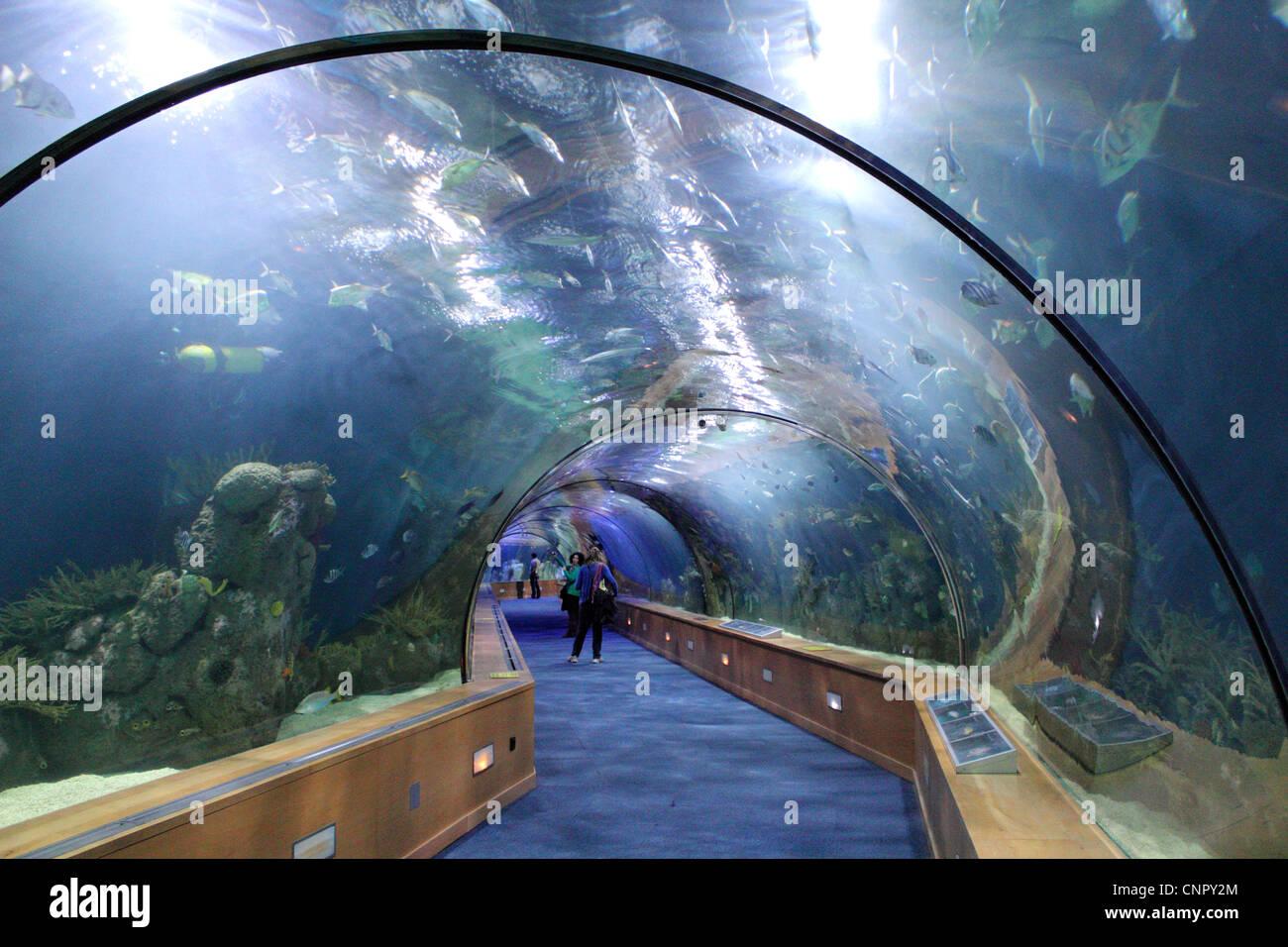 Underwater tank at oceanografic aquarium valencia spain for Aquarium valencia precio