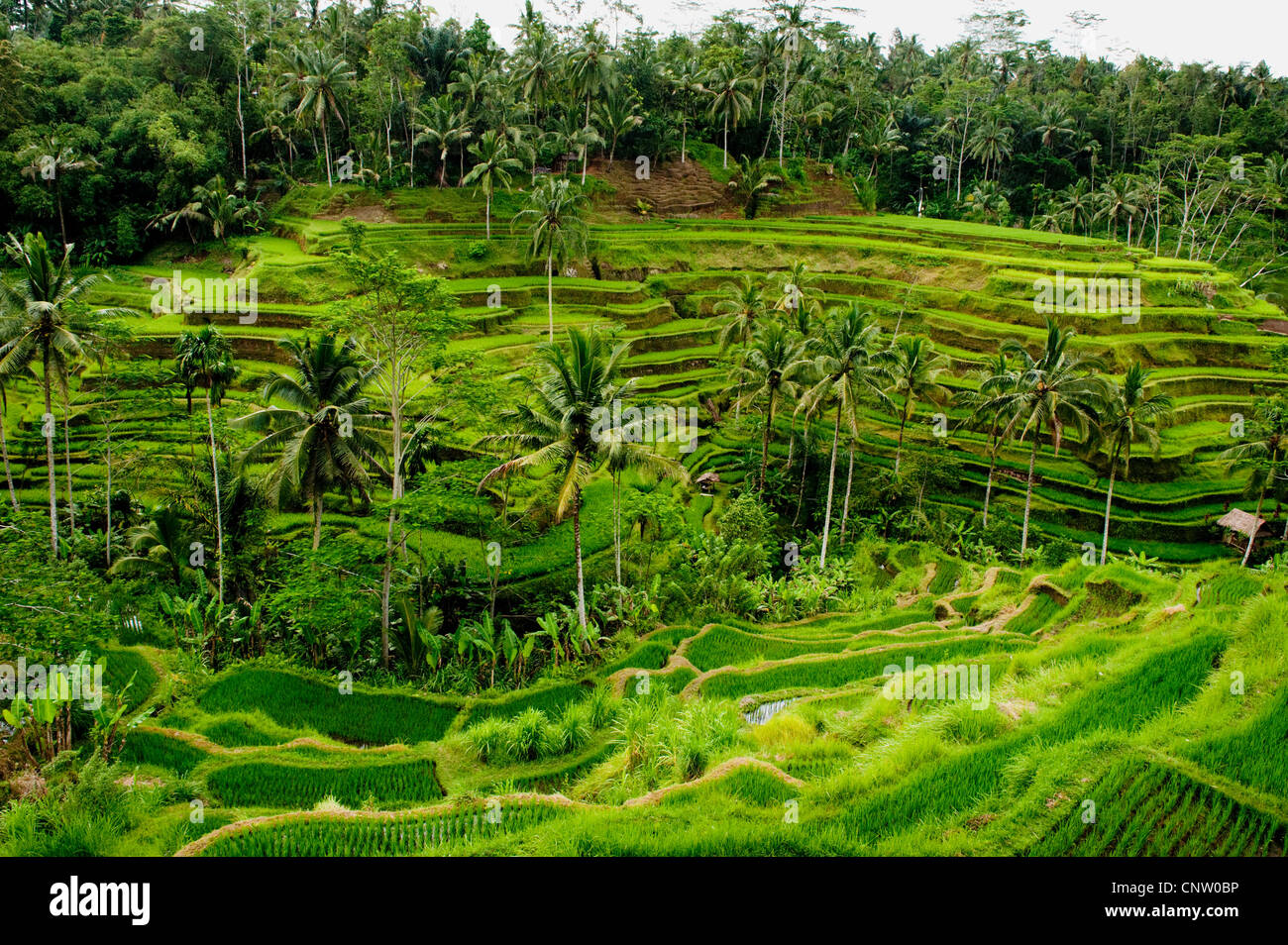 Some Of The Most Spectacular And Dramatic Rice Terraces In Bali - Where is bali located