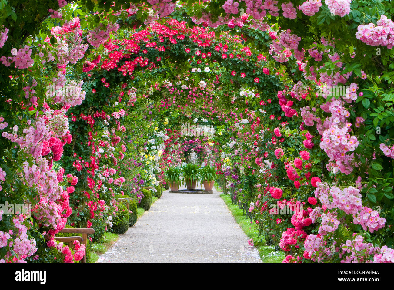 Amazing Rose Arches In A Rose Garden, Germany