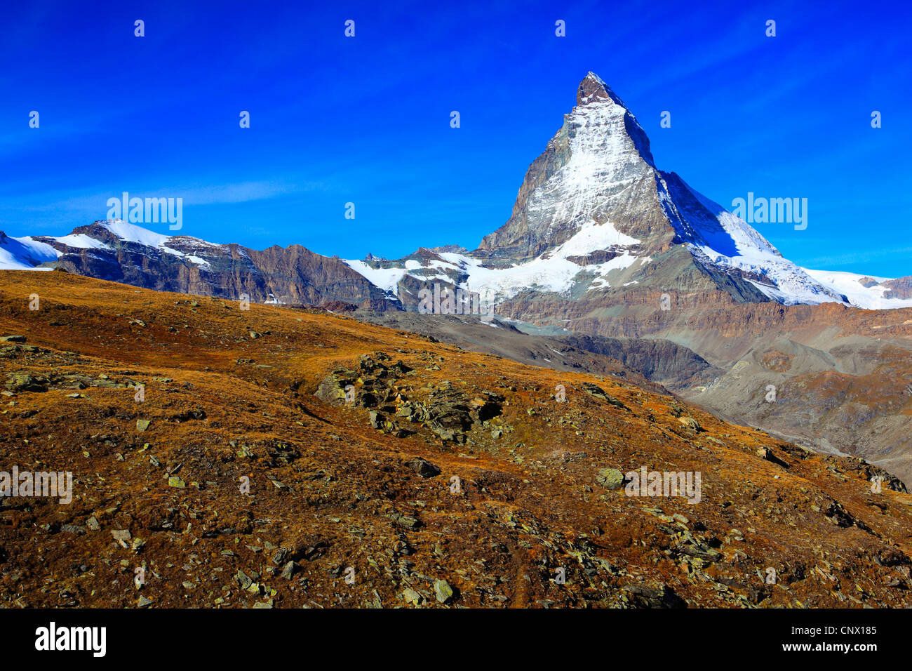 view at the matterhorn from mountain slope with blueberry bushes