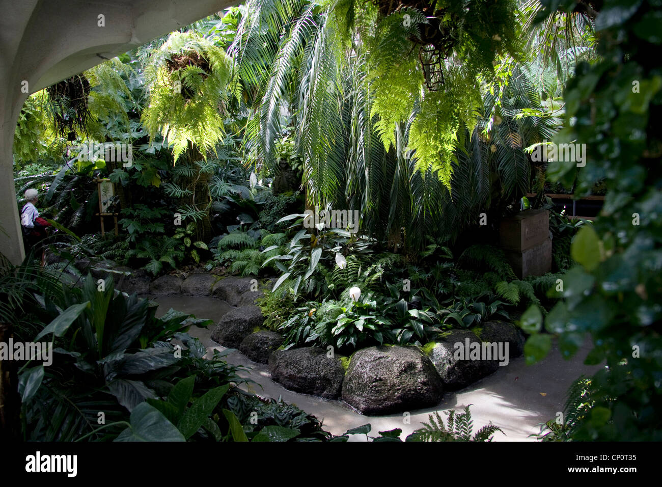 tropical plants in the glass house, christchurch botanic gardens