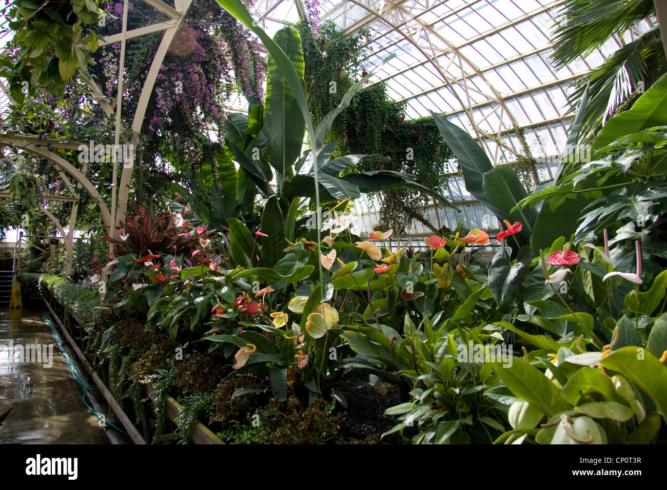 Prepossessing 40 house tropical plants design inspiration for Grow landscapes christchurch