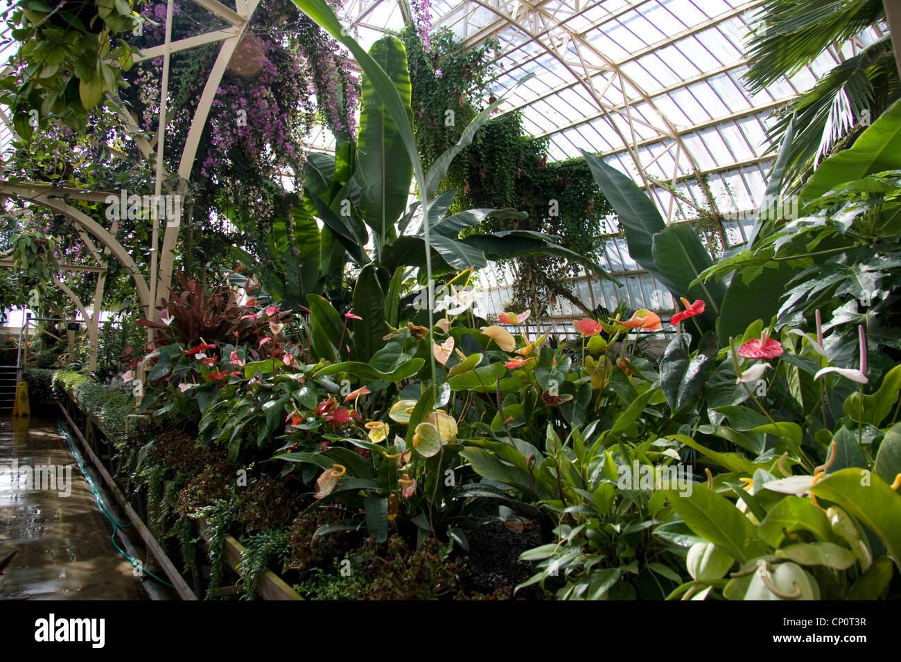 Prepossessing 40 house tropical plants design inspiration for Grow landscapes christchurch
