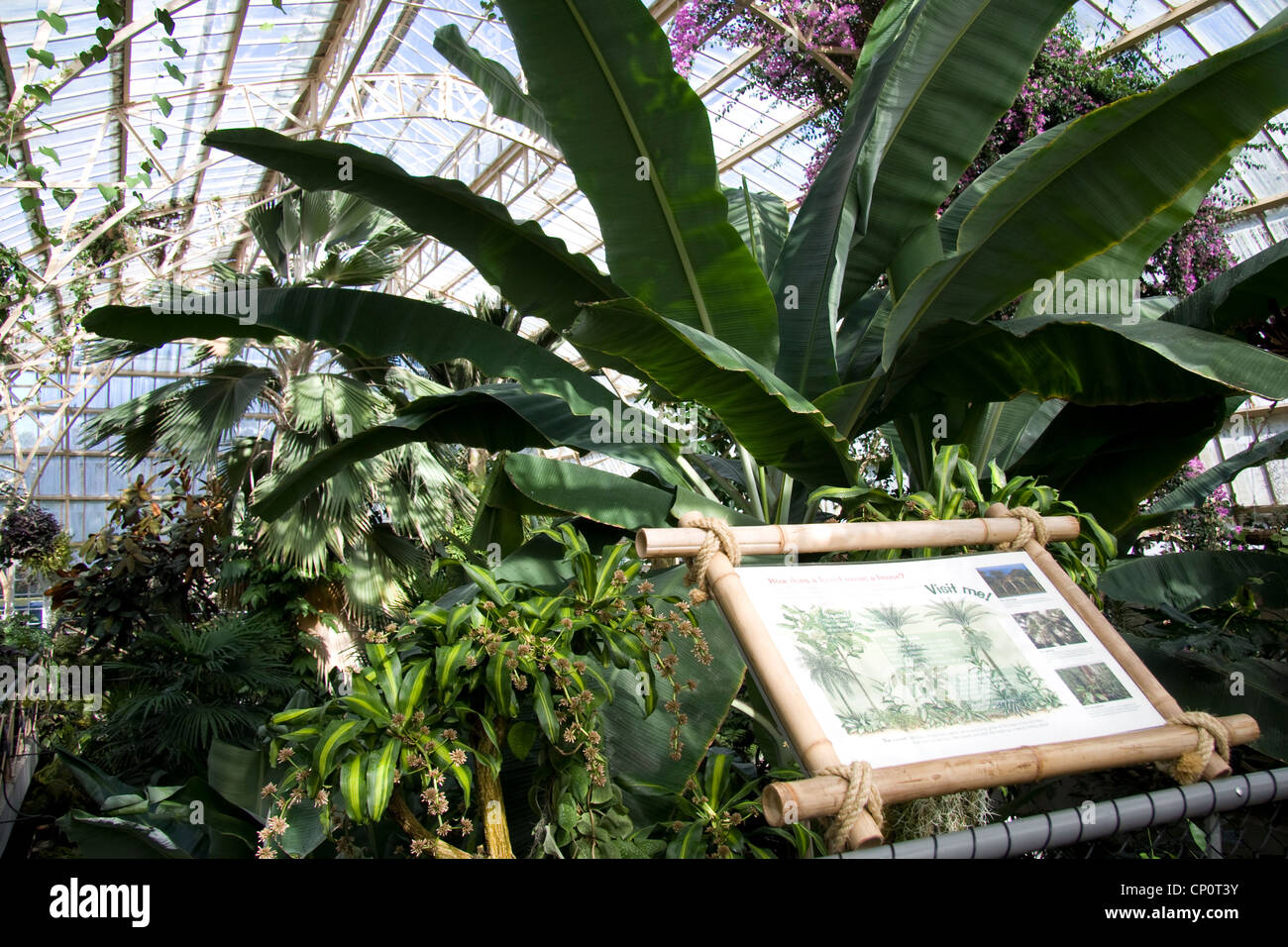 tropical plants in the glass house and plants' chart, christchurch