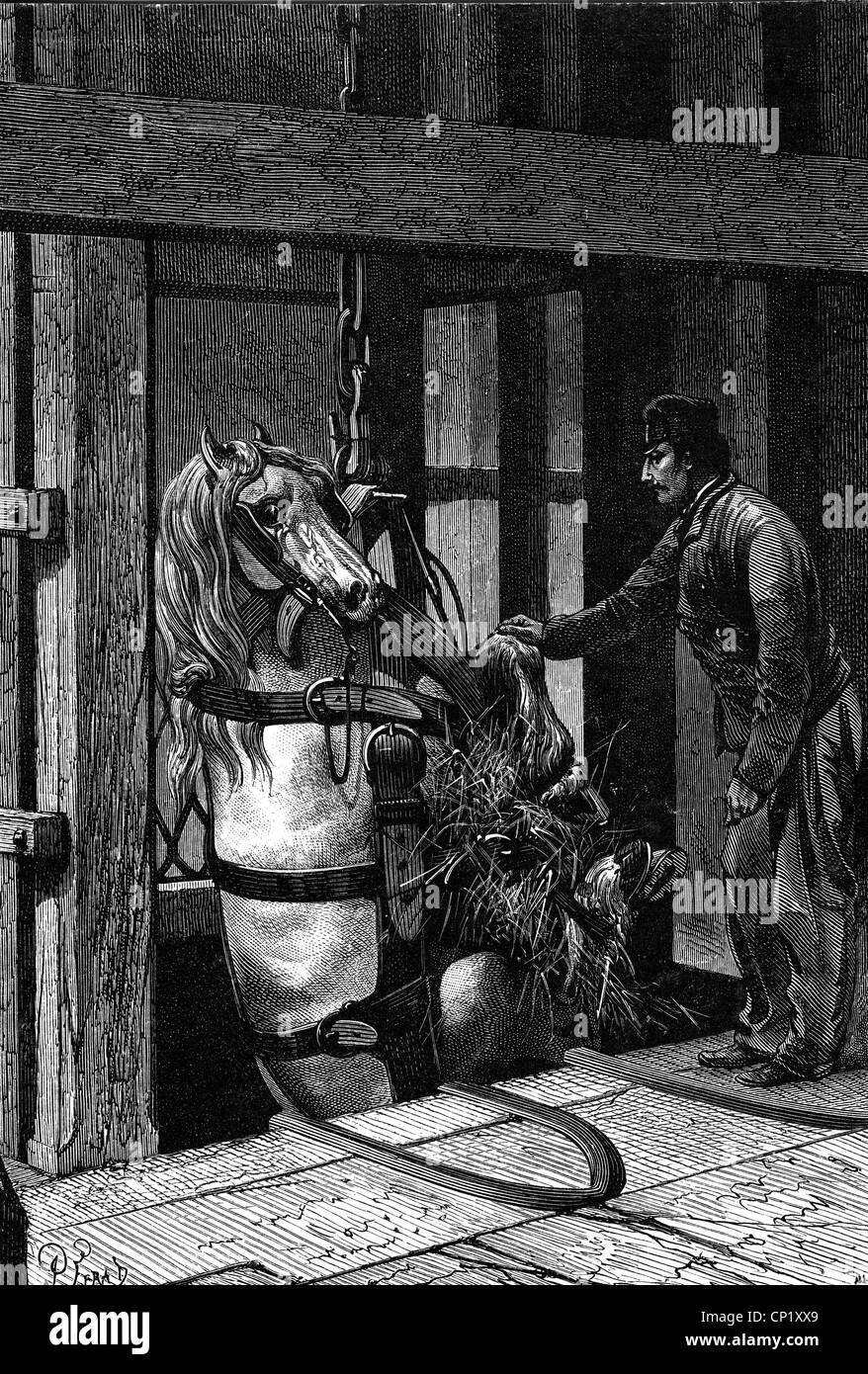 How Pit Ponies Replaced Children in the Coal Mines ...