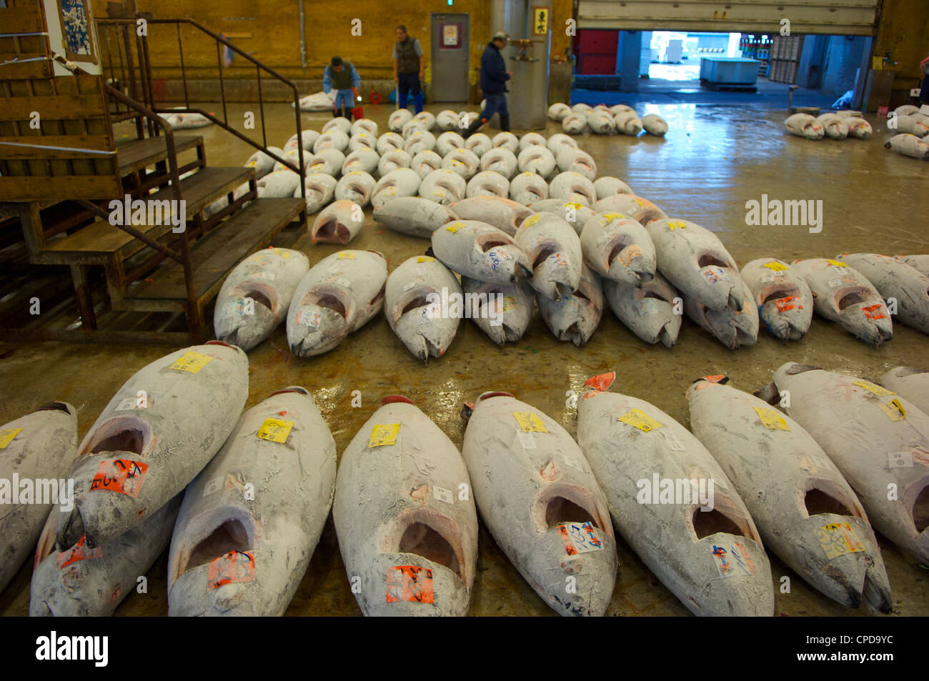 Tuna Hell At Tsukiji Wholesale Fish And Seafood Market In The Early Morning It Is The Largest In The World Tokyo Japan