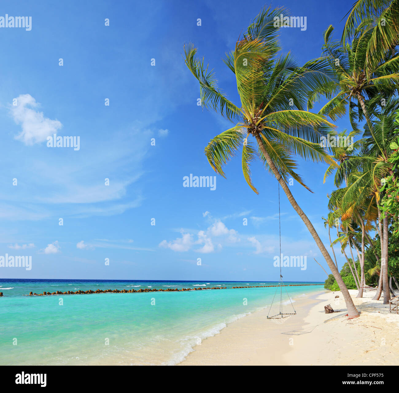 Beach Scene With A Swing On Palm Tree Sunny Day Kuredu Island Maldives Lhaviyani Atoll