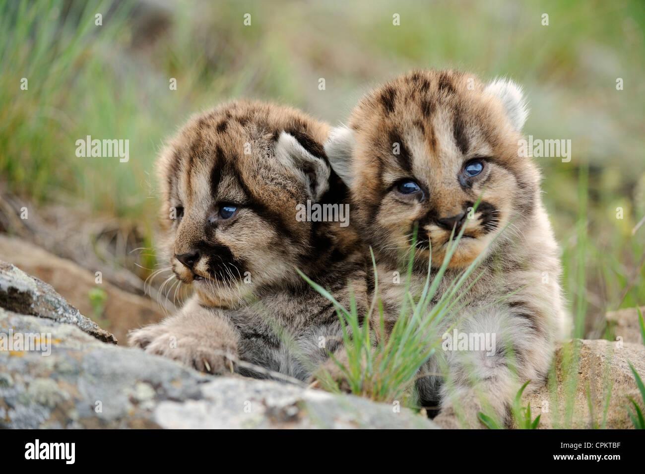 kitten wallpapers free download