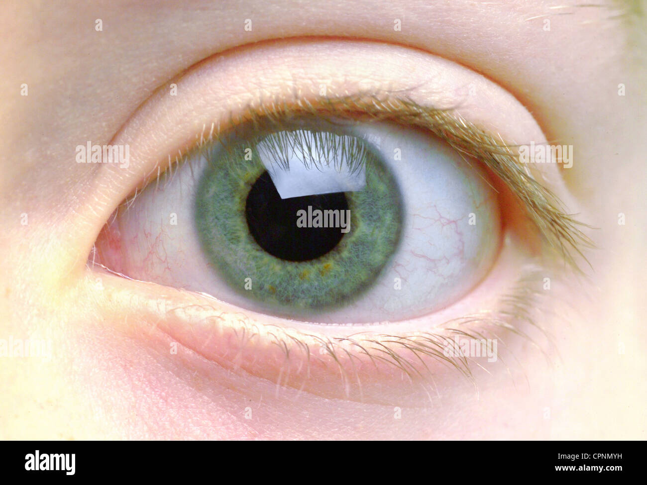 medicine anatomy eye of an 8 year old girl germany color of eyes colour of eyes green beautiful beauty pupil pupils a