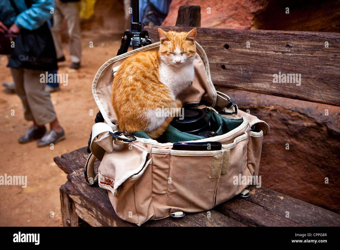 Cat Sleeping In Camera Bag Outside The Treasury (al ...