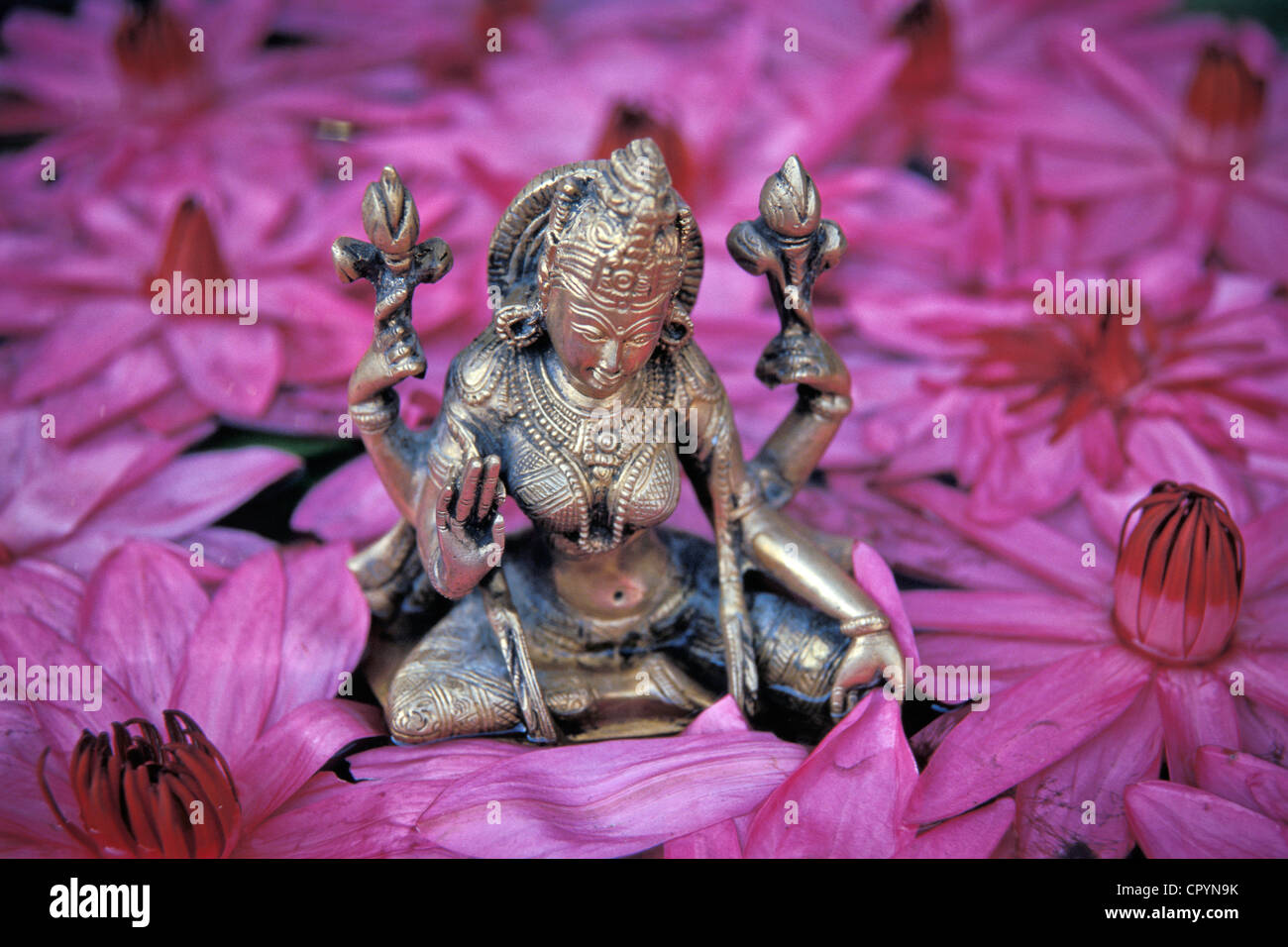 Goddess lakshmi hindu goddess of fortune and beauty lotus goddess lakshmi hindu goddess of fortune and beauty lotus flowers thrissur kerala south india asia dhlflorist Choice Image