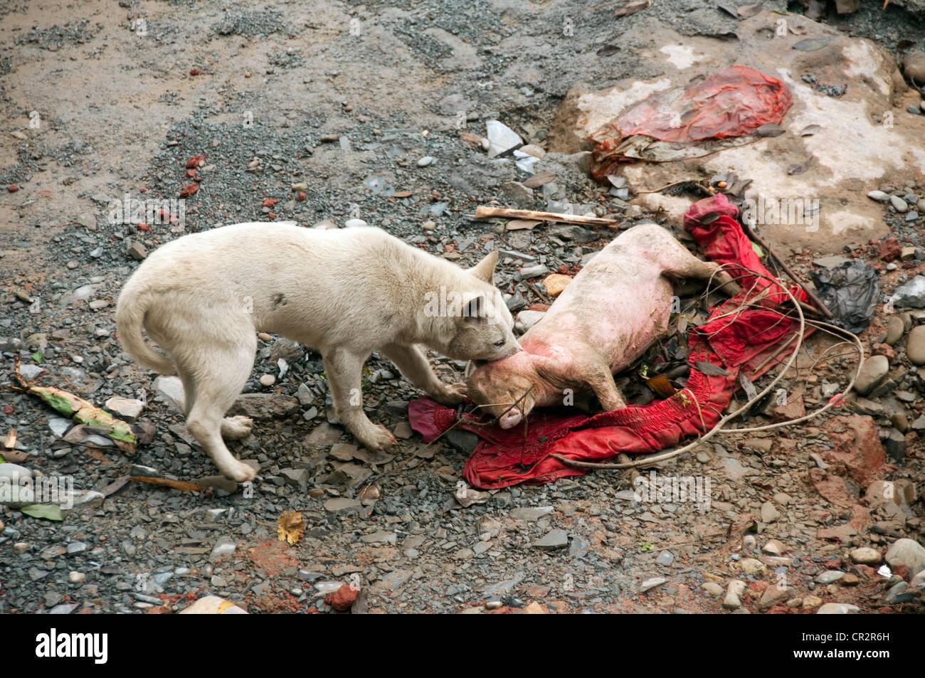 Small Pig Dog Breeds