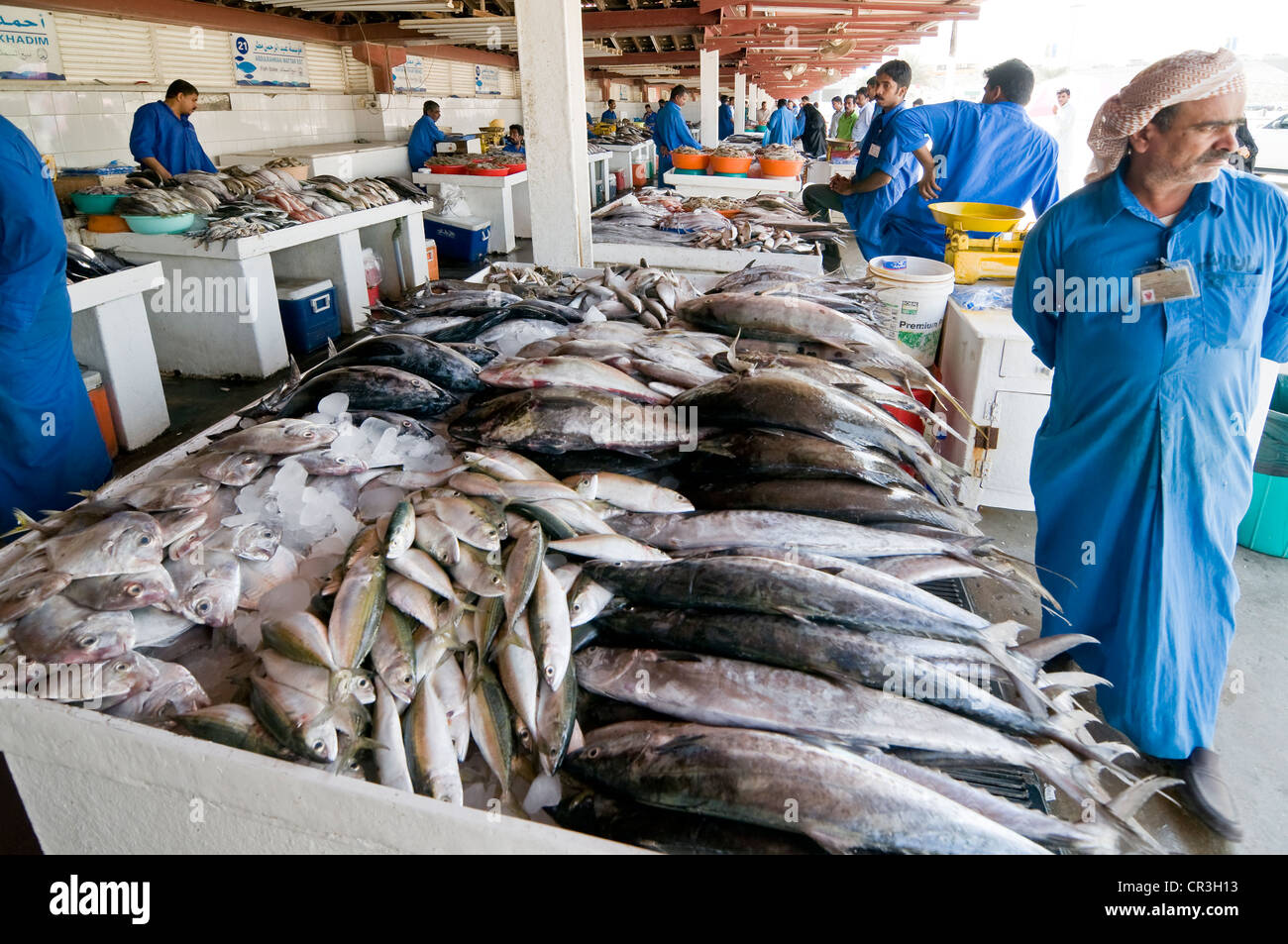 Fish market sharjah united arab emirates middle east for Wholesale fish market near me