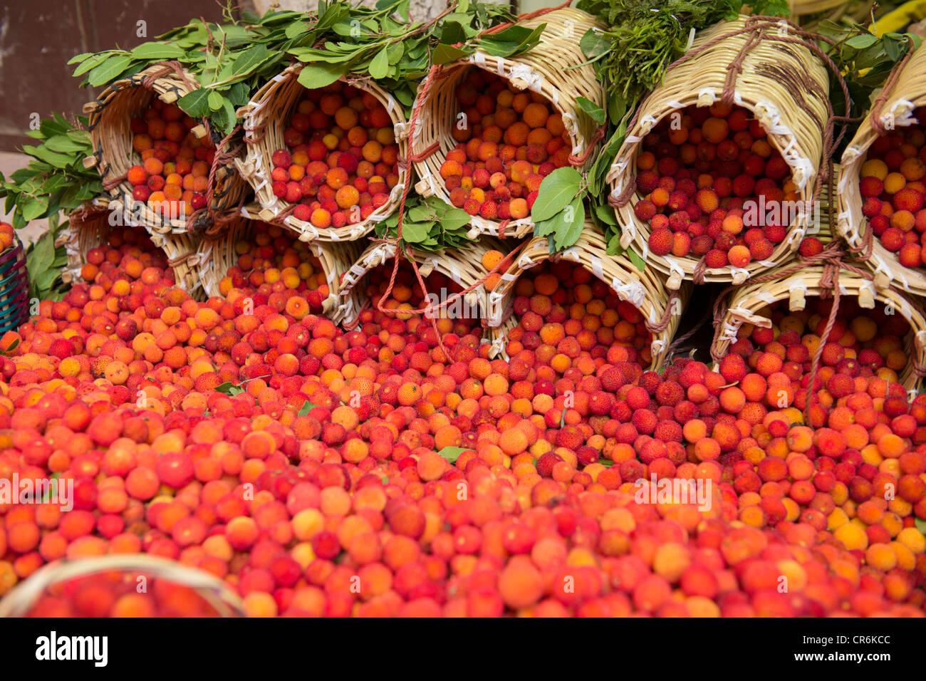 strawberry tree arbutus unedo stock photos  strawberry tree, Beautiful flower