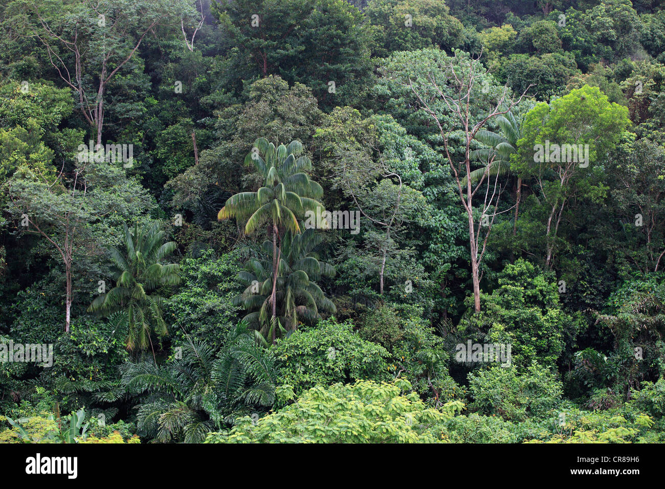 Think, southeast asian rain forest 3012 that necessary